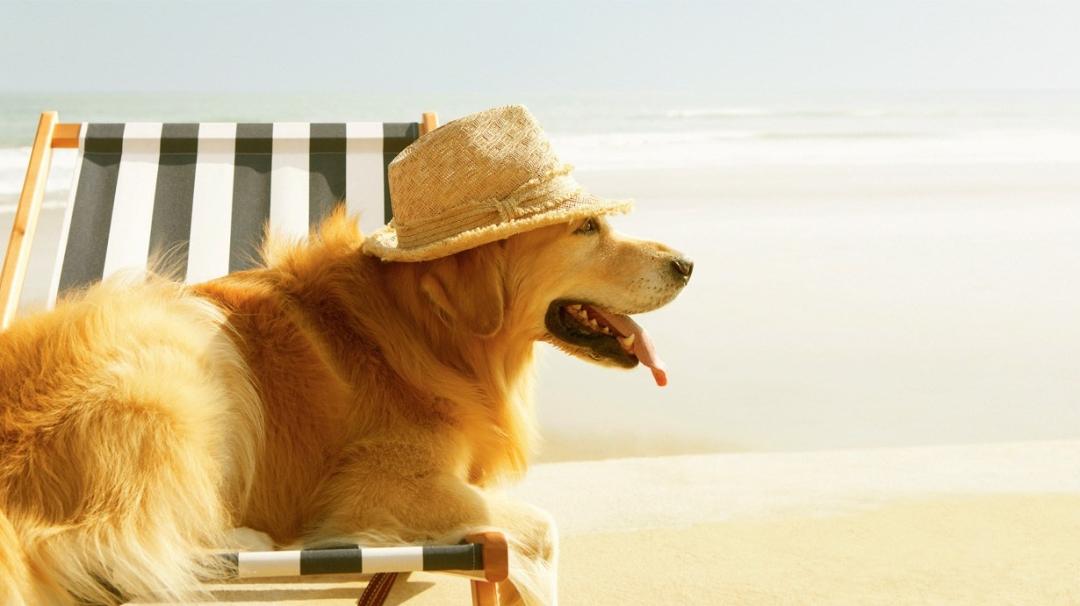 perro playa tomando sol