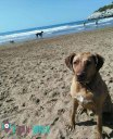 Playas Pet Friendly que admiten perros en Barcelona
