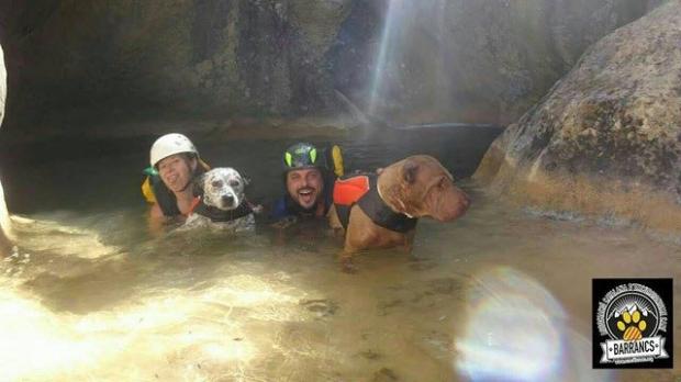 barrancos con perros