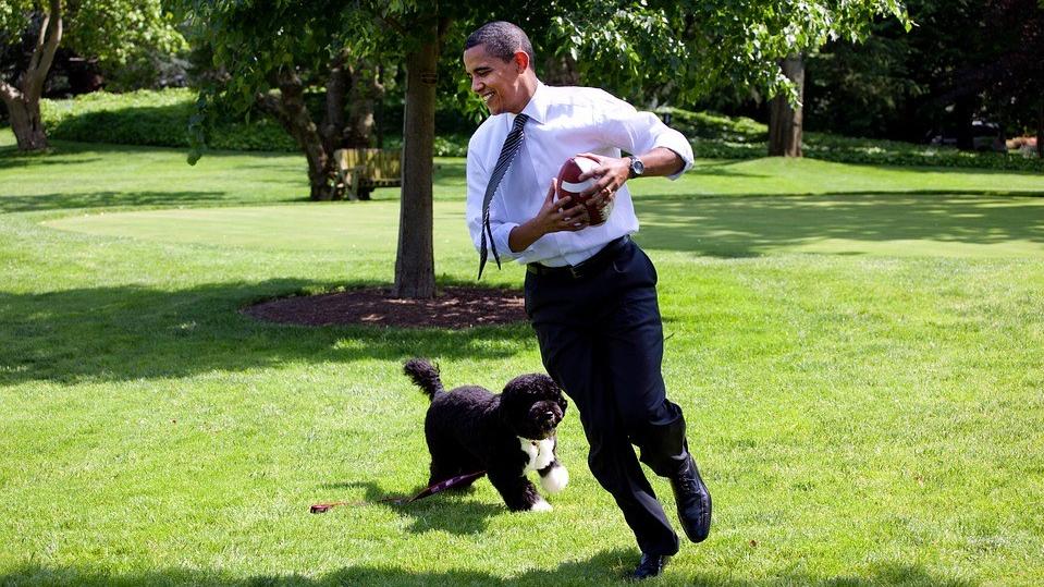 perros en el trabajo, beneficios para el empleado, el perro y la empresa