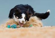 Playas Pet Friendly que admiten perros en Tarragona