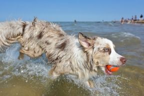 Playas Pet Friendly que admiten perros en Girona