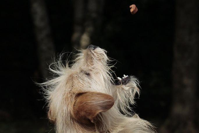 perro comiendo pienso