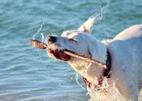 Playas Pet Friendly que admiten perros en Tarragona