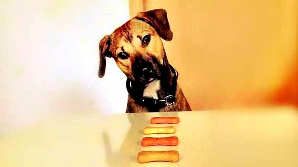 Nutrición Natural en perros