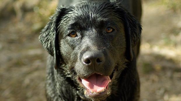 Ozonoterapia Canina