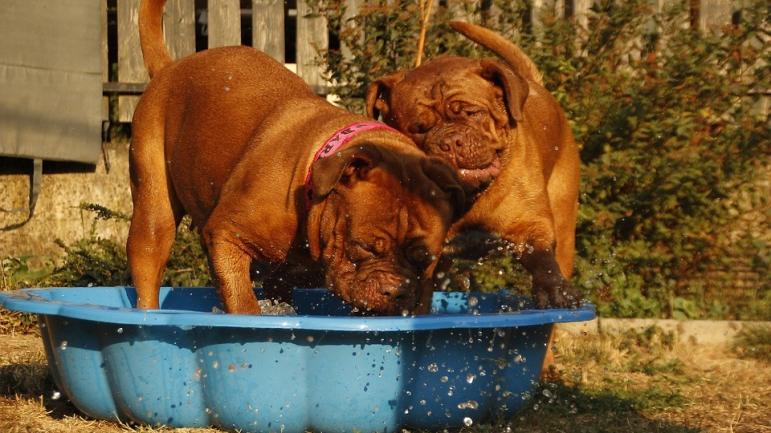 ozonoterapia para perros