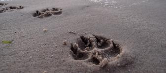 Playas Pet Friendly que admiten perros