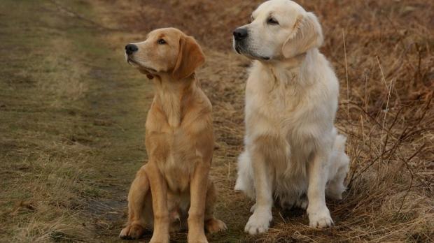 perros sanos