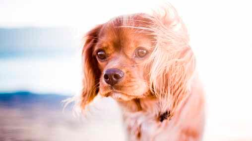 necesita protección solar mi perro
