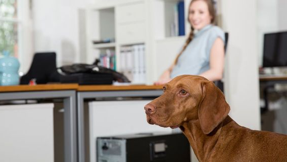 Perros en el trabajo: el mejor empleado