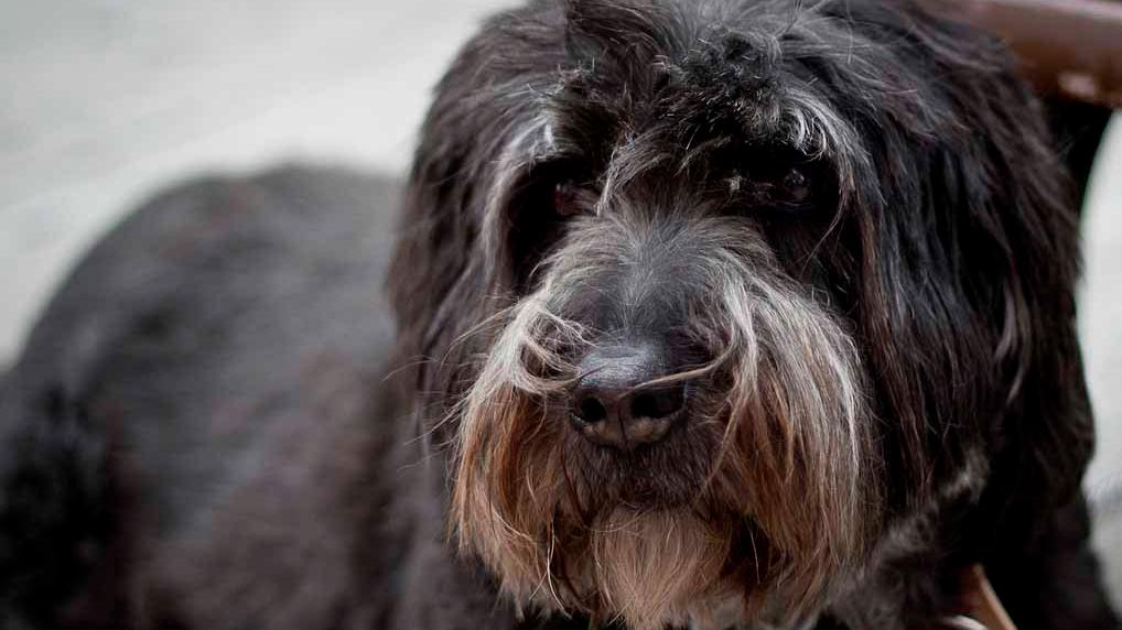 senderismo con perros beneficios para el perro