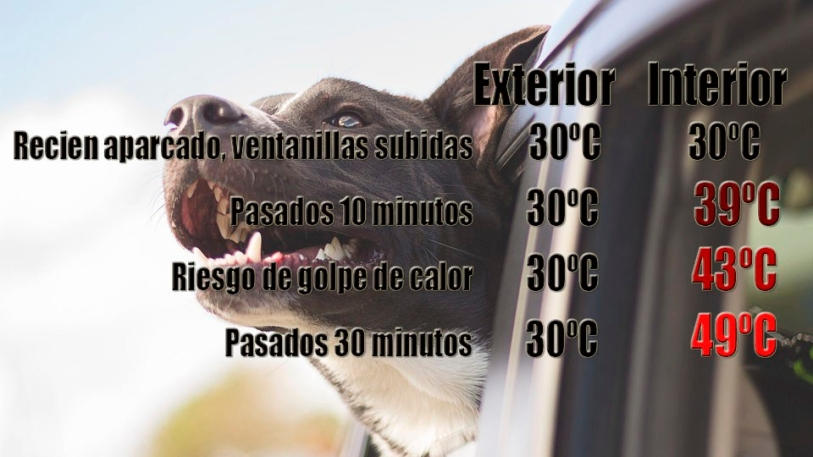 temparaturas coche verano perros