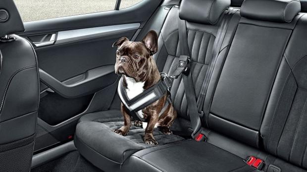 En el coche con mi Mascota, perro