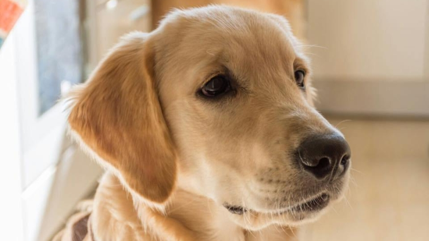 Perro en clase, proyecto Assissi, escuela sabadell