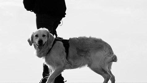 normativa perros en la montaña