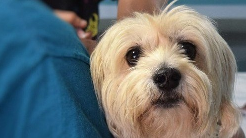 perros Donaciones de sangre caninas
