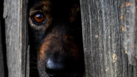 dog-2215185_960_720