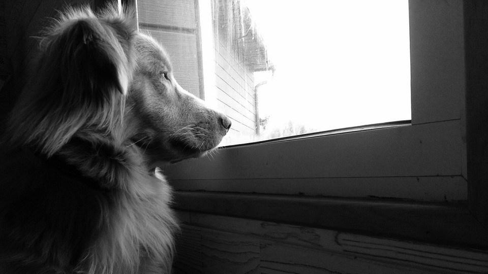 miedo a los petardos en perros