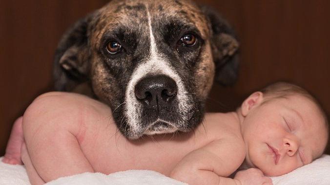 llegada de un bebé a una casa con perro