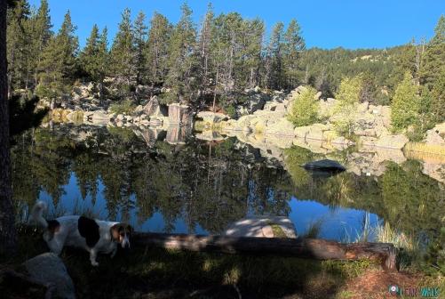 Lles de Cerdanya con Perros