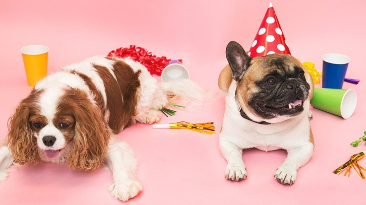 pastel cumpleaños platano para perros