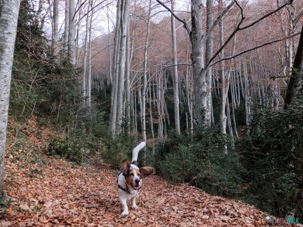 Fageda Grevolosa con perros