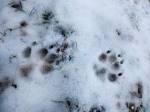 Fageda Grevolosa, excursión con perros