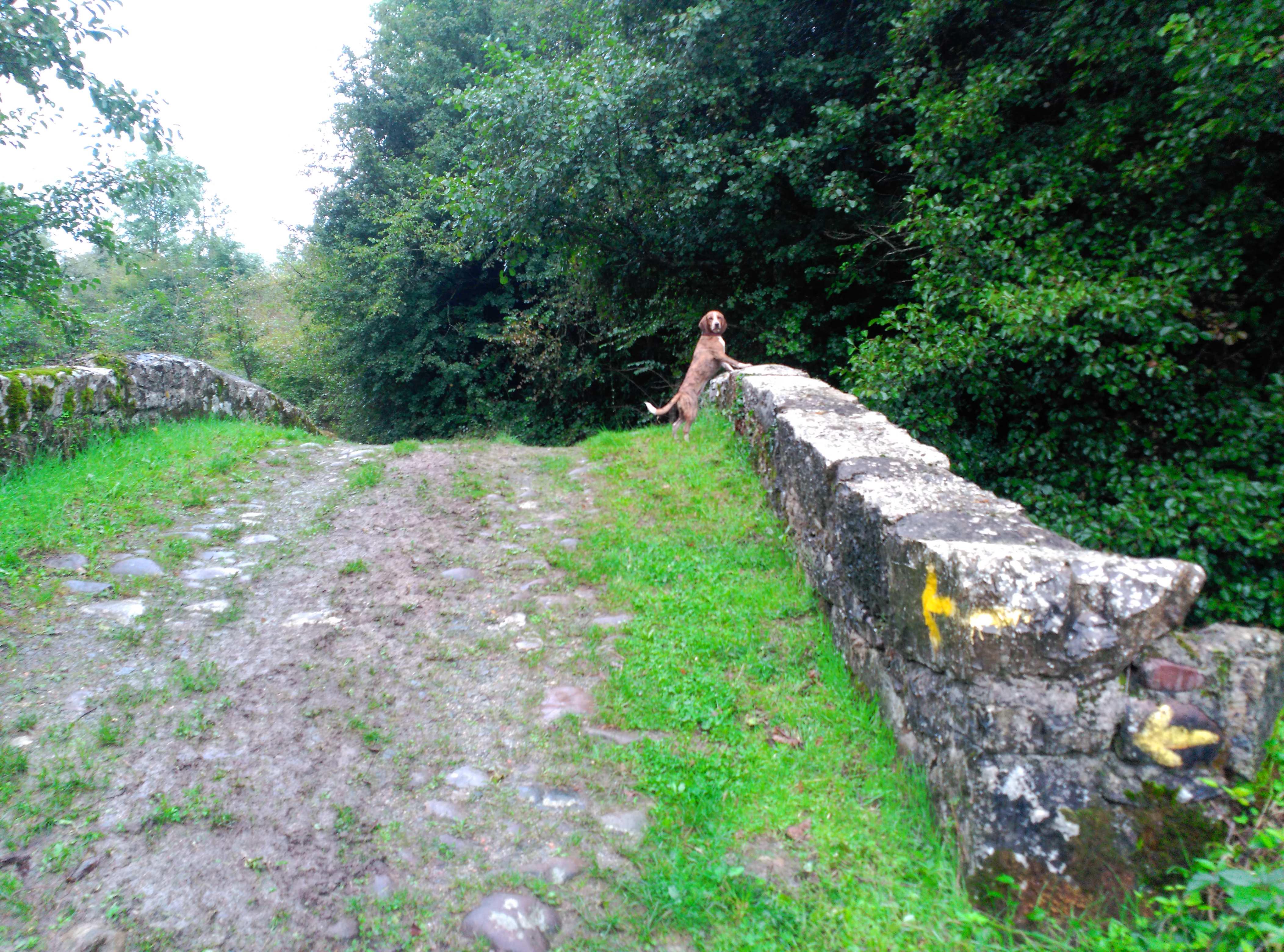 Camino con perros: Última etapa Lola curioseando