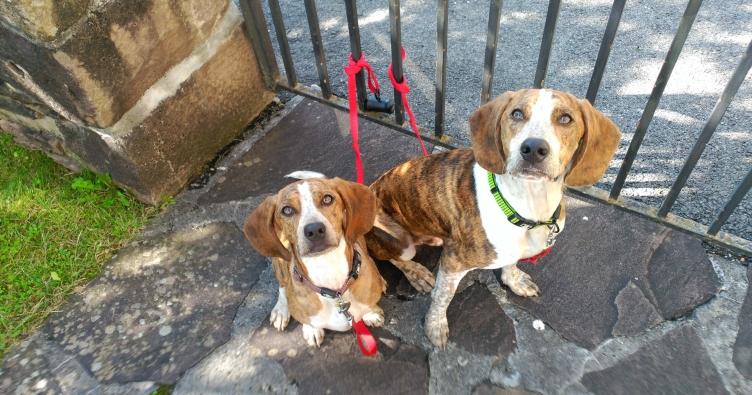 Camino con perros: Cuarta etapa Descansando en Berroeta