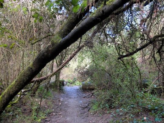 camino perros senderismo rio agua gorg barcelona
