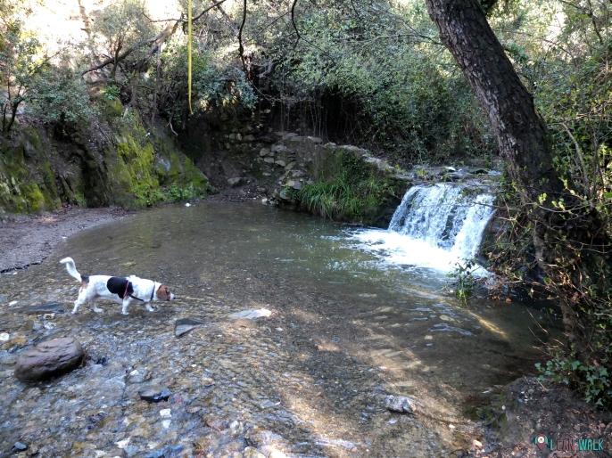 gorg de can bosquets, floresta, con perros