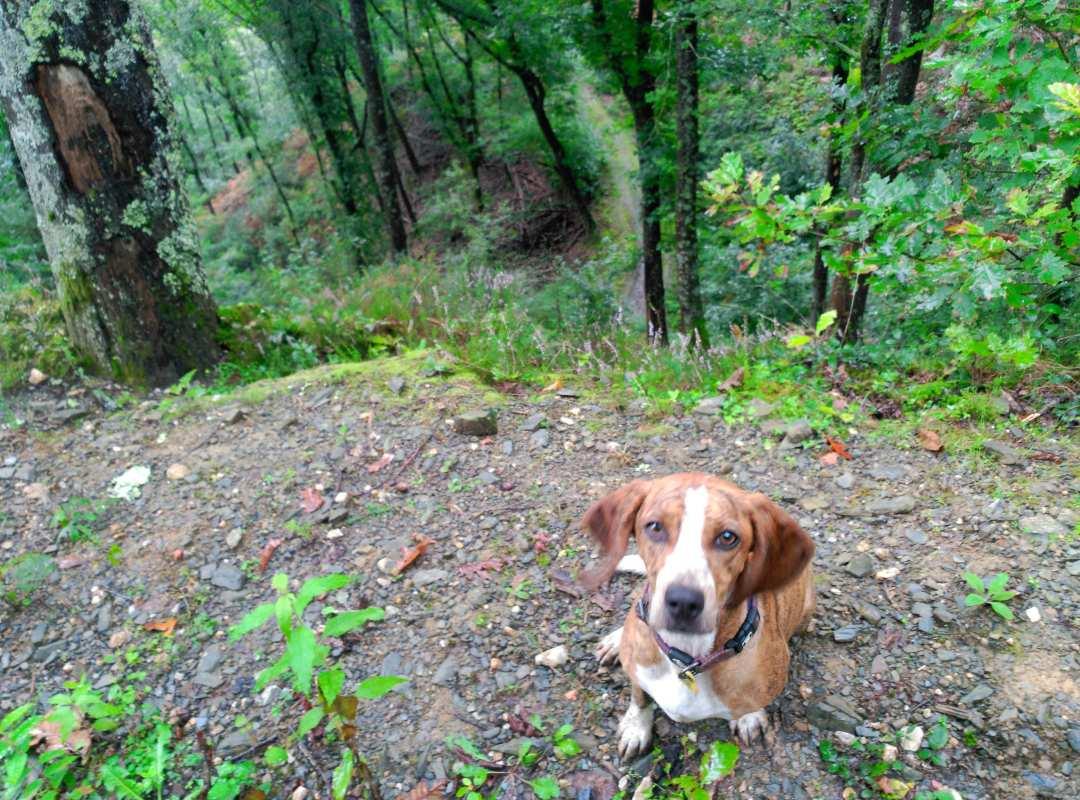 Camino con perros: Segunda Etapa Lola subiendo el Puerto de Otsondo