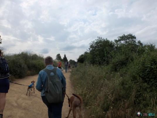 Camino ancho: ruta con perros collserola