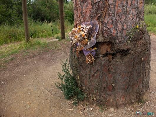 Taller de Introducción a la Detección de Olores con Indicans, ruta con perros collserola