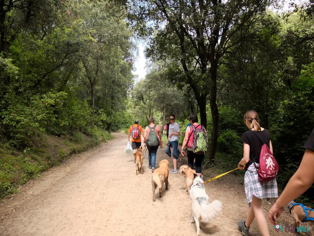 senderismo con perros en grupo. collserola, educación canina