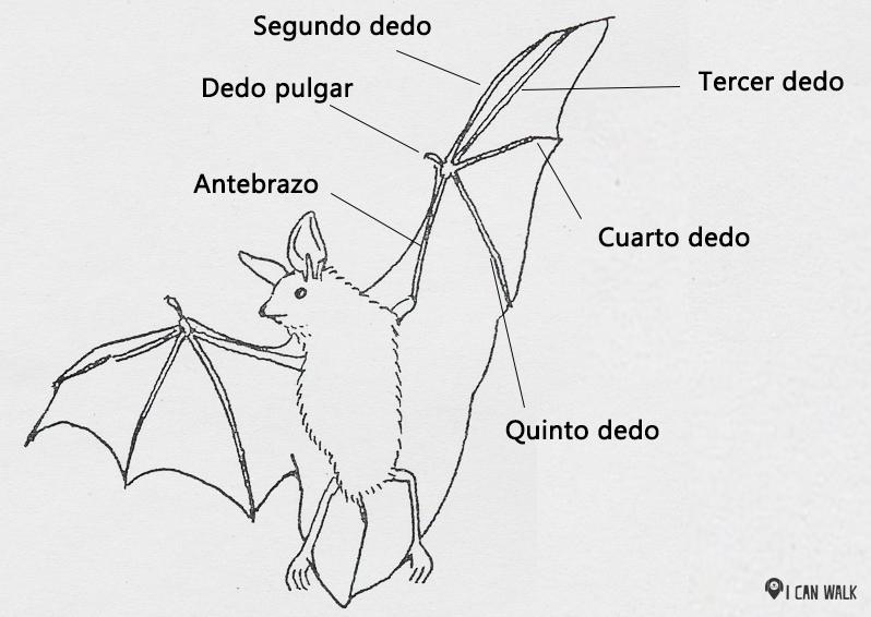bat-8779_960_720