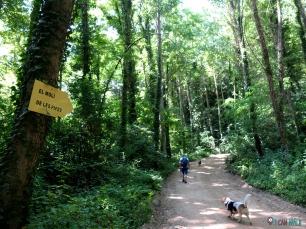 Riera d'Arbúcies senderismo con perros, sombra todo el camino