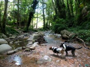 Riera d'Arbúcies senderismo con perros, agua casi todo el camino