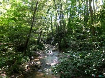 Riera d'Arbúcies, perros rio agua senderismo