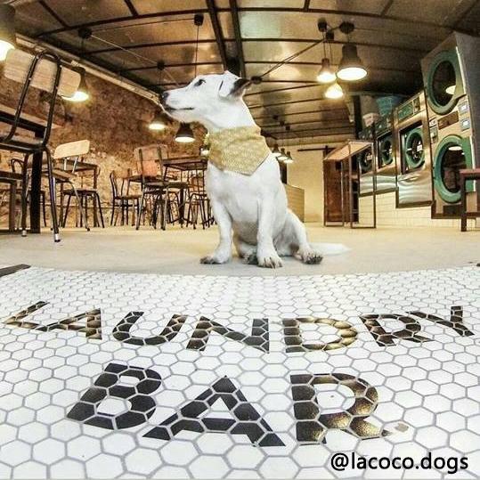 laundry bar, petfriendly barcelona, autora de la foto @lacoco.dogs