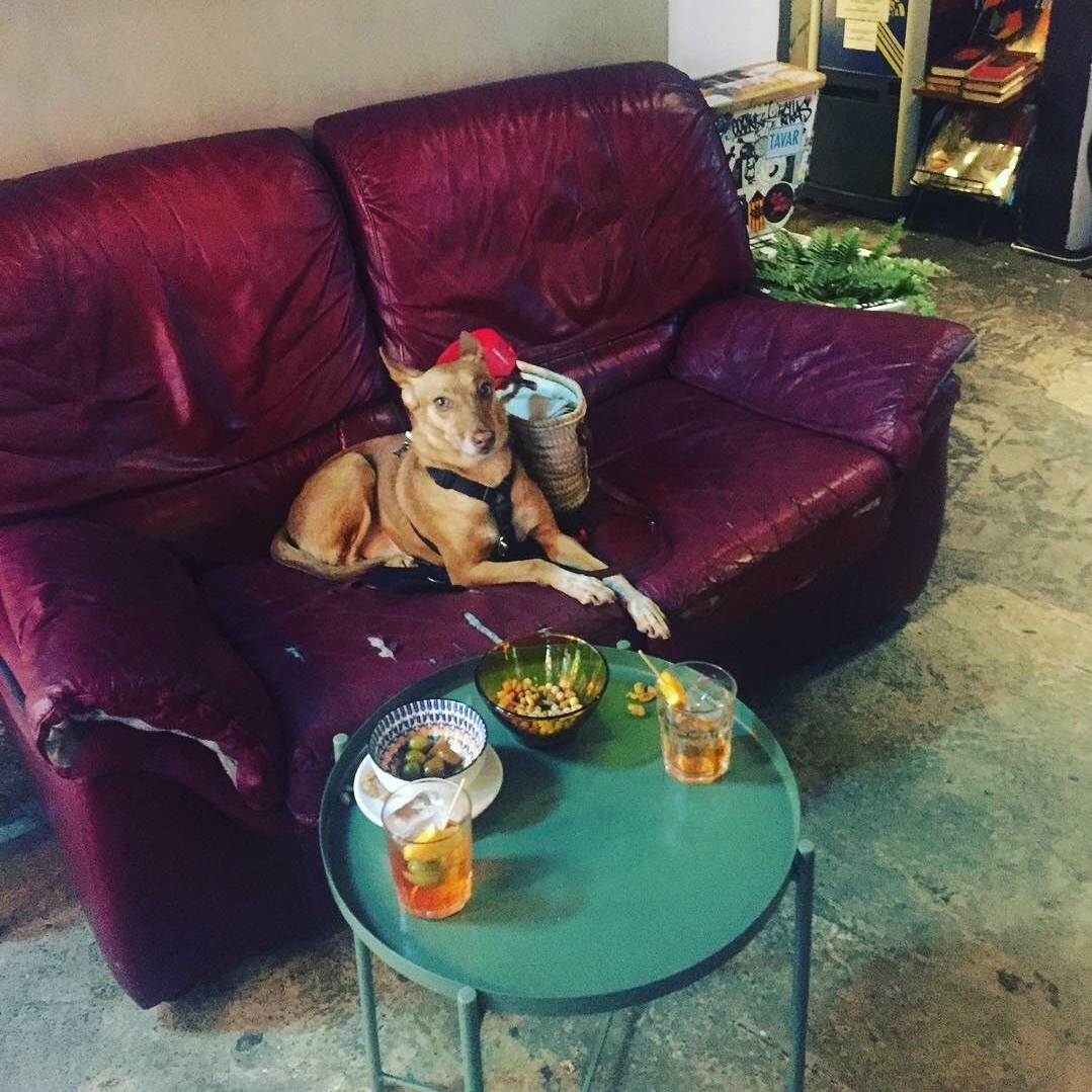 33|45 bar petfriendly para ir con perros en barcelona