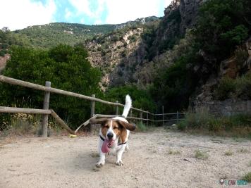 Gorgs con perro Gualba