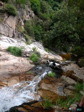 Cruzamos el agua para seguir el camino. Gorgs con perros Gualba