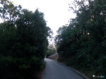 camino asfaltado