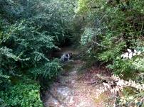 Bassal de la Guineu, Milka nos dice por dónde subir