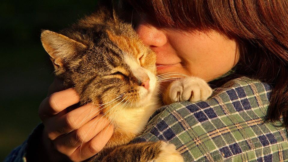 duelo por un animal, gato